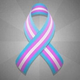 Trans Ribbon